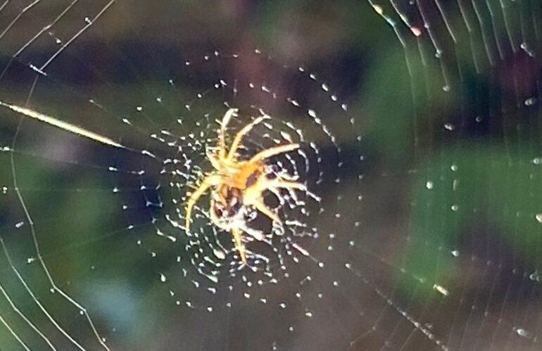 Spinnenangst – Spinnenphobie